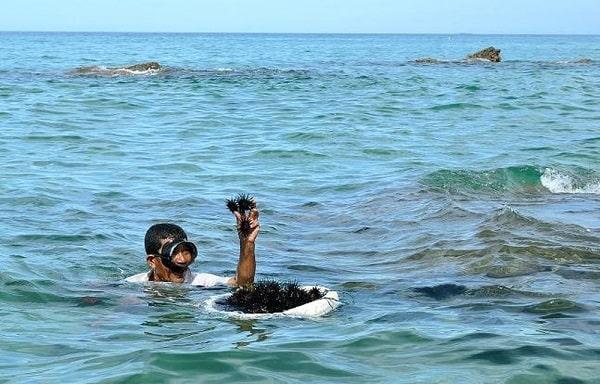 Du khách trải nghiệm đi bắt nhum biển cùng những người dân làng chài Phú Quốc