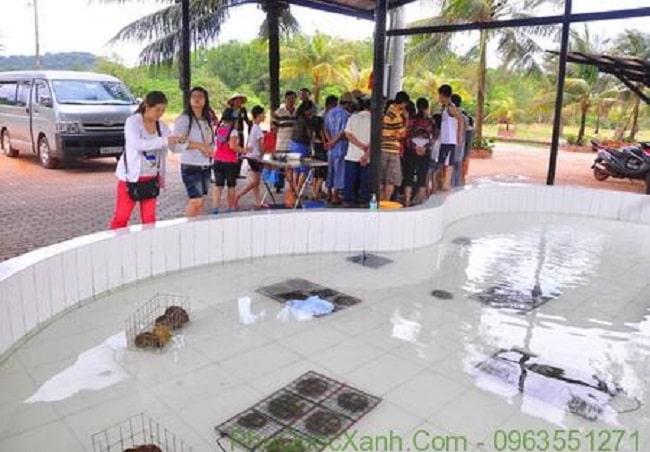 Tham quan cơ sở nuôi cấy ngọc trai Phú Quốc