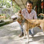 Trang trại chó quý Phú Quốc ở thủ đô khiến nhiều người chết mê.