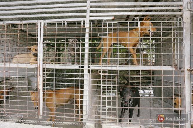 Trang trại chó Phú Quốc đa dạng phong phú về chủng loại