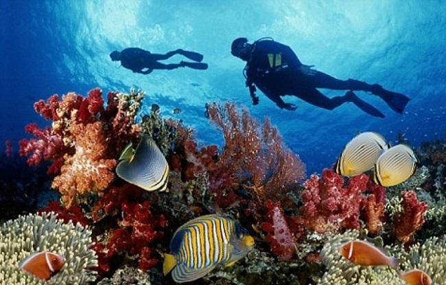 Lặn ngắm san hô biển Phú Quốc
