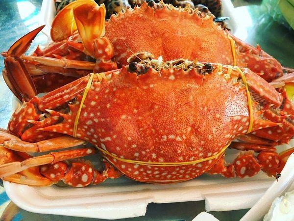 Ghẹ Phú Quốc xưa nay nổi tiếng khắp bốn phương về thịt cua ngọt, thơm
