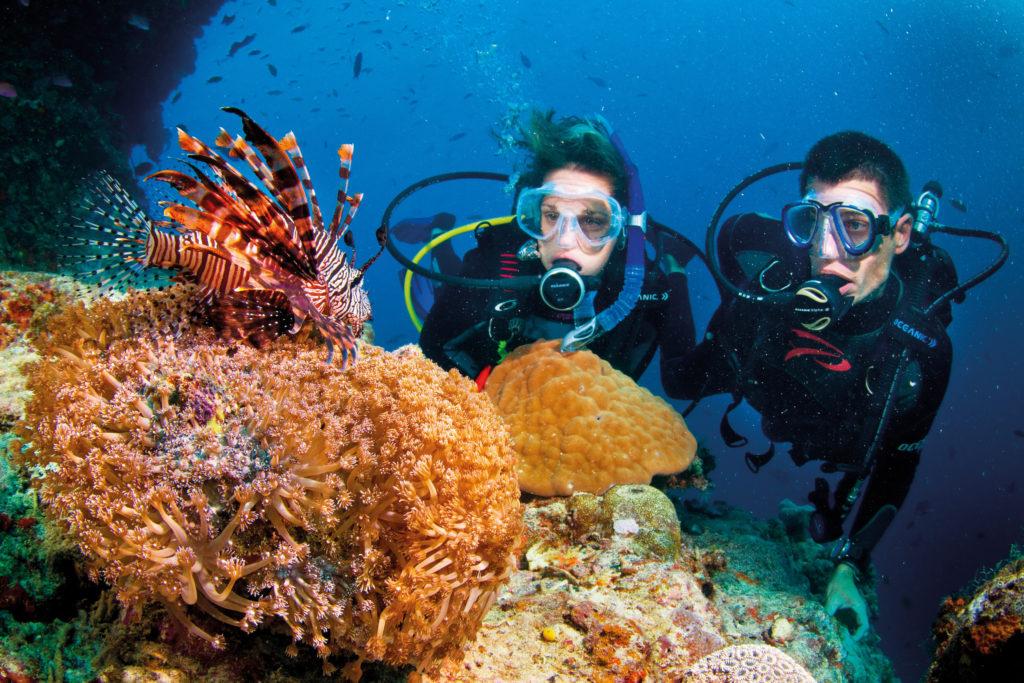 Ngắm san hô đảo Phú Quốc