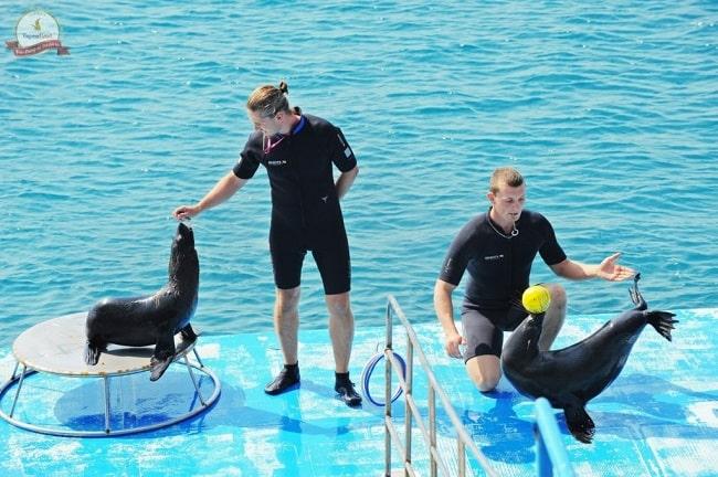 Buổi biểu diễn xiếc với các chú cá heo cực thân thiện