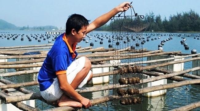 Tham quan cơ sở nuôi cấy ngọc trai tại Hòn Thơm Phú Quốc