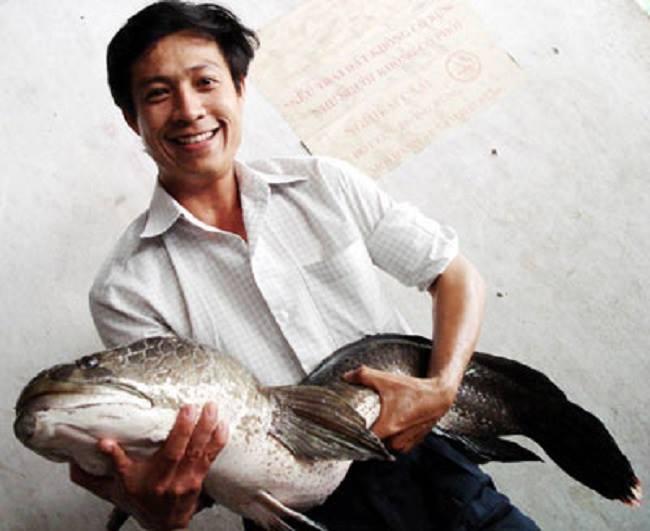 Con cá khổng lồ tại suối Tranh Phú Quốc