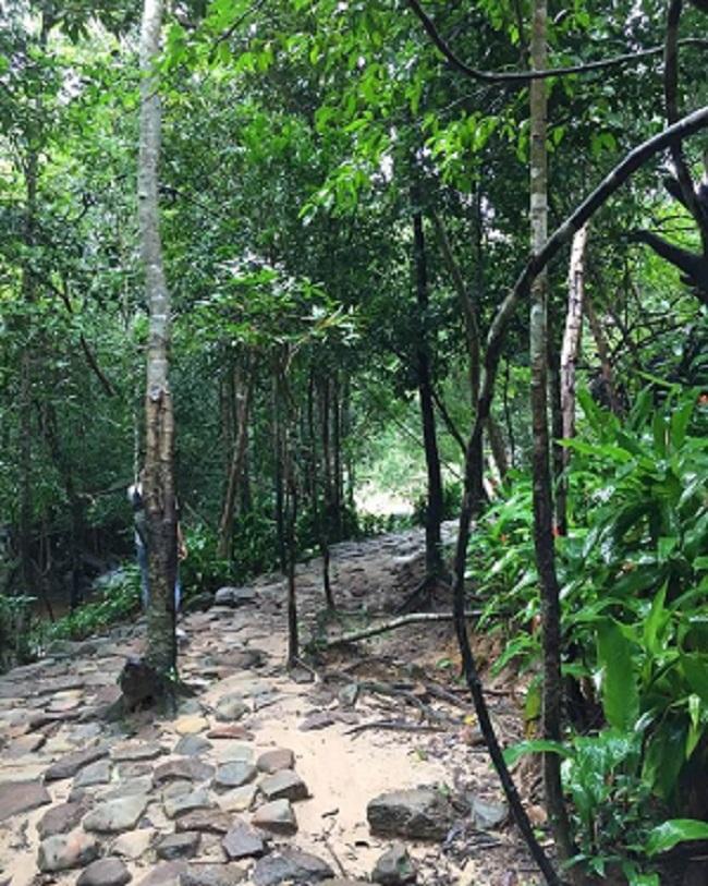 Dọc hai bên đường vào suối Tranh Phú Quốc.