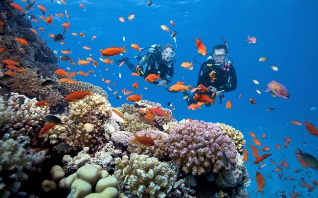 Trải nghiệm lặn biển ngắm san hô với những ai ưa khám phá