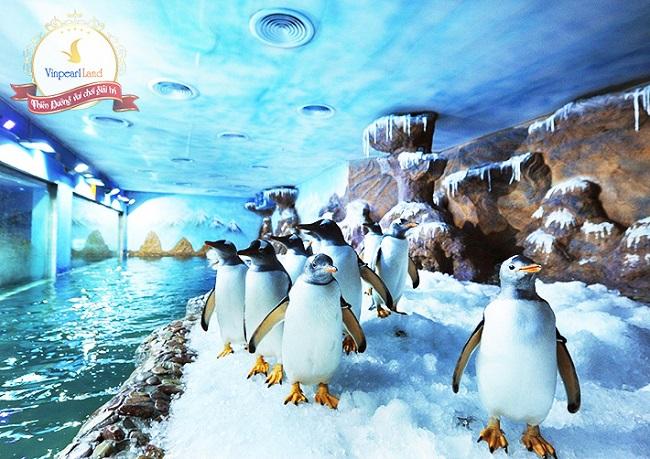 Ngắm chim cánh cụt Gentoo siêu dễ thương